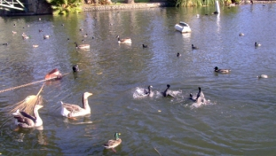 EchoPark_Lake_Birds